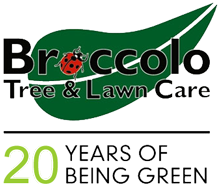 Broccolo Logo